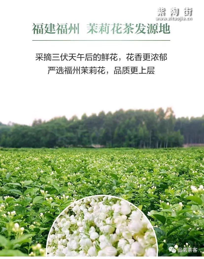 福州茉莉花茶插图2