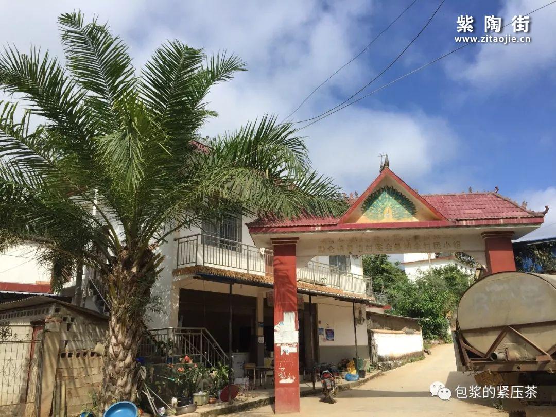 易武老字号,曼庄(曼砖)古茶林插图12
