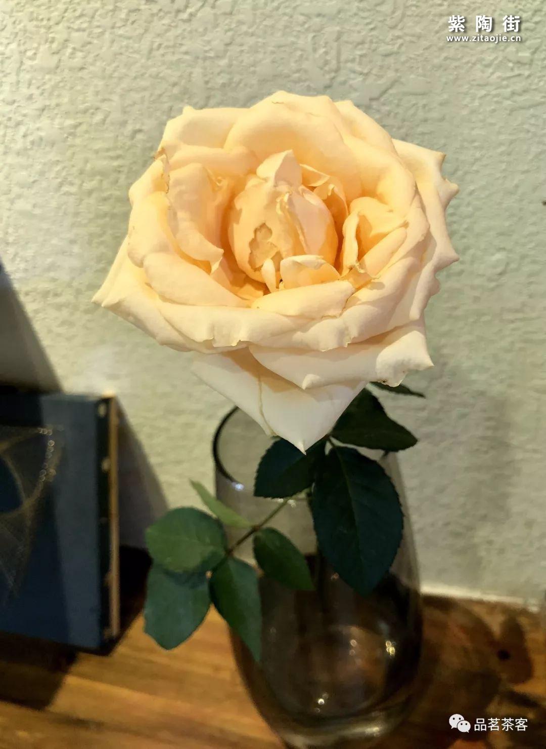 岩茶名丛:黄玫瑰插图1