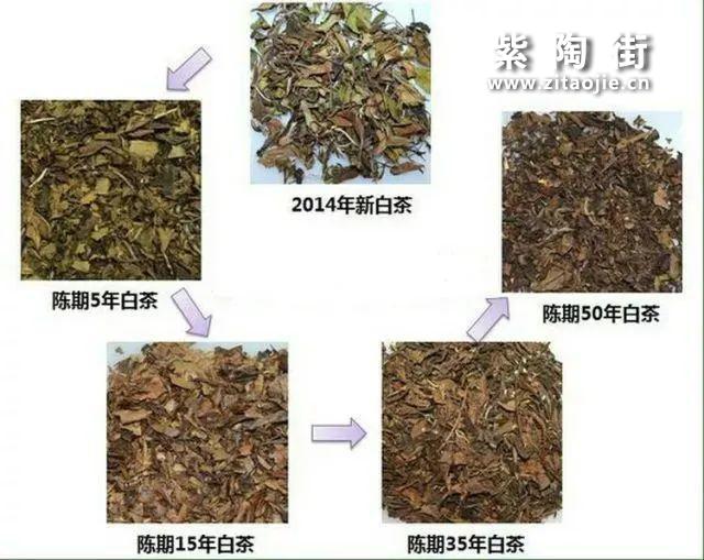 白茶是一年茶、三年药、七年宝?插图5