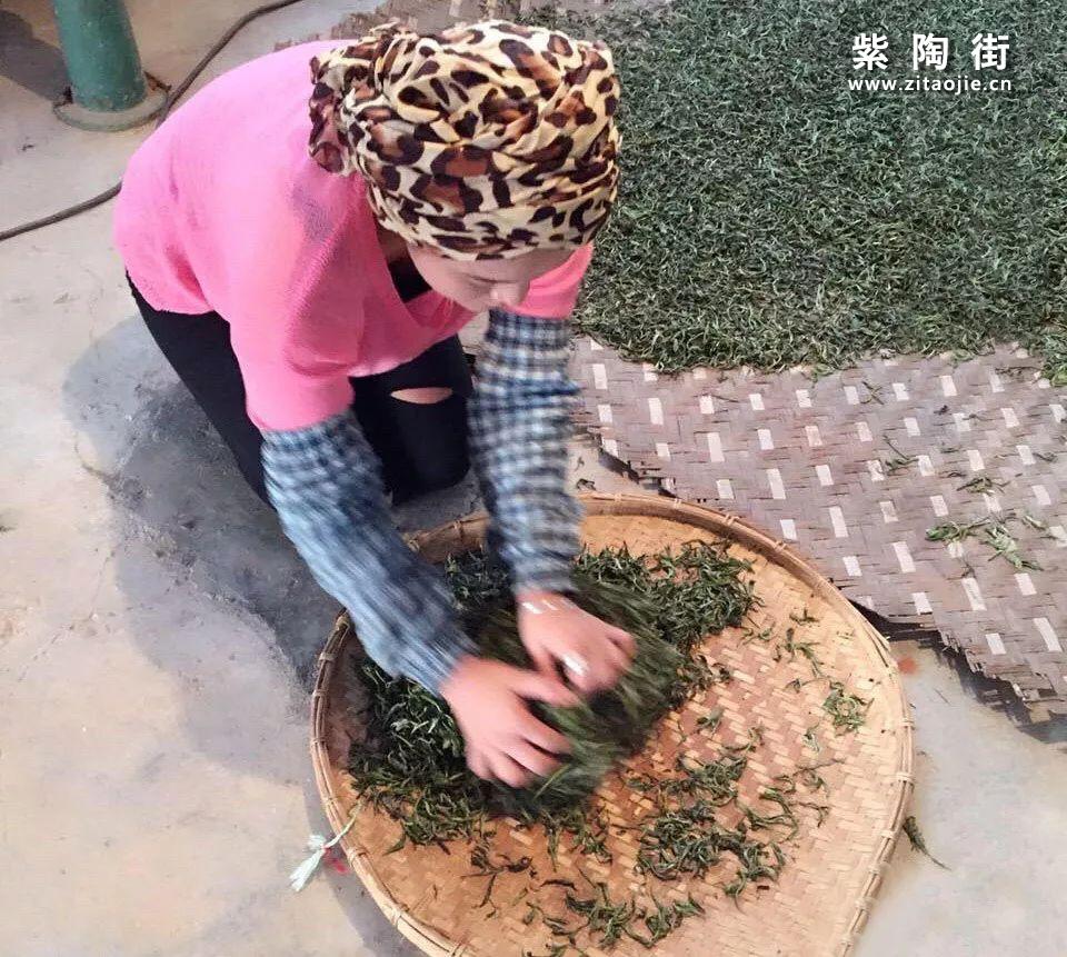 云南临沧小众茶区•梅子箐古树介绍~锅底塘!插图3